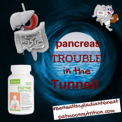 pancreas-enzymes-intestine-nutrition-patmoon